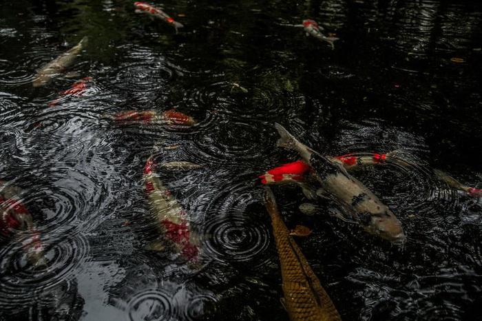 Дождь и пейзажи Японии: фотографии от Hidenobu Suzuki
