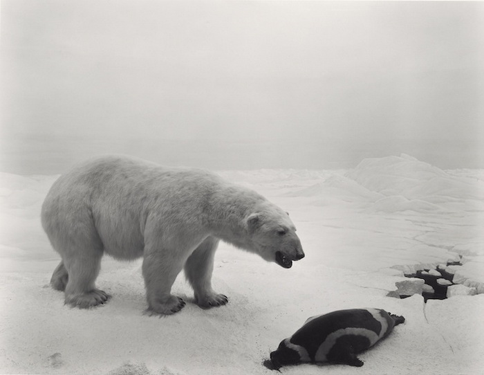 Дикие животные на фотографиях Хироши Суджимото (Hiroshi Sugimoto)