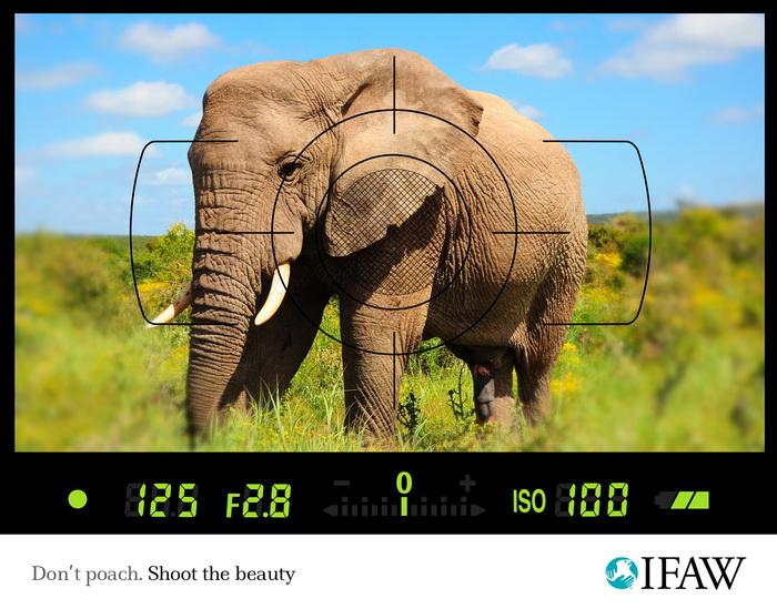 Экологическая реклама Международного фонда защиты животных IFAW против браконьерства