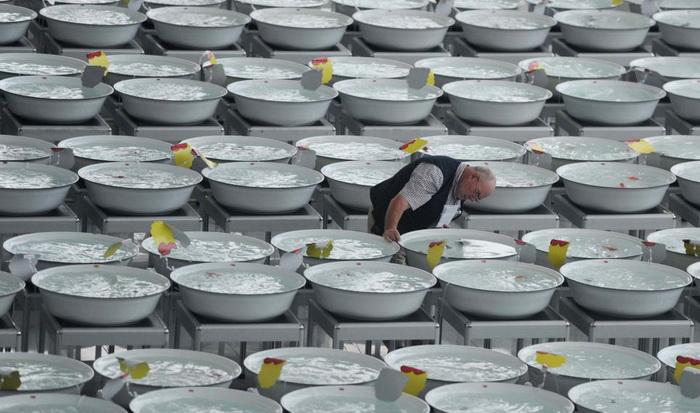 В конкурсе красоты приняли участие 3 тысячи золотых рыбок