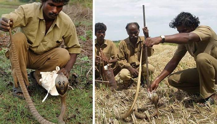 Племя ирула - ловцы змей