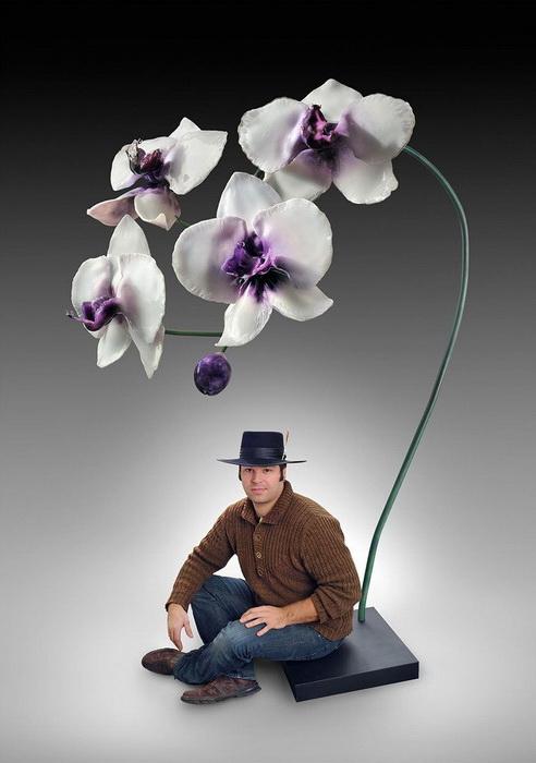 Гигантская орхидея