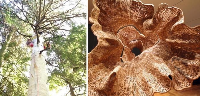 140-летнее дерево и его *двойник*