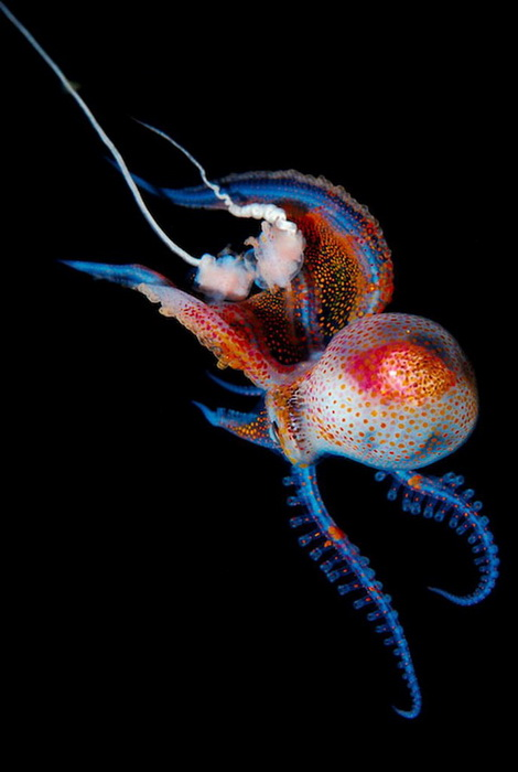Подводный мир на фотографиях Joshua Lambus