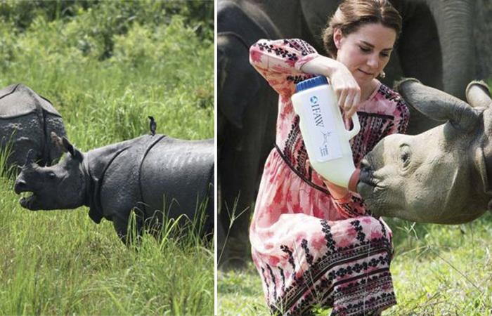 Война охранников носорогов и браконьеров в Национальном парке Казиранга.