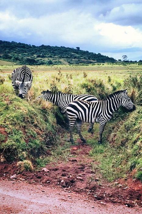 Дикие животные в Африке, которые нуждаются в защите