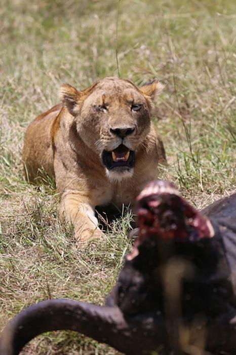 Дикие животные часто страдают от браконьеров