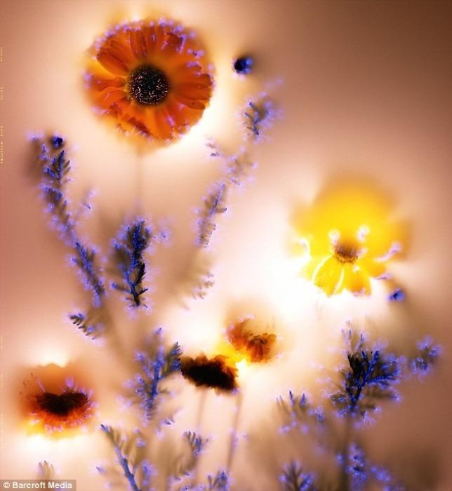 *Цветочная аура* на фотографиях Роберта Бьюелтмана