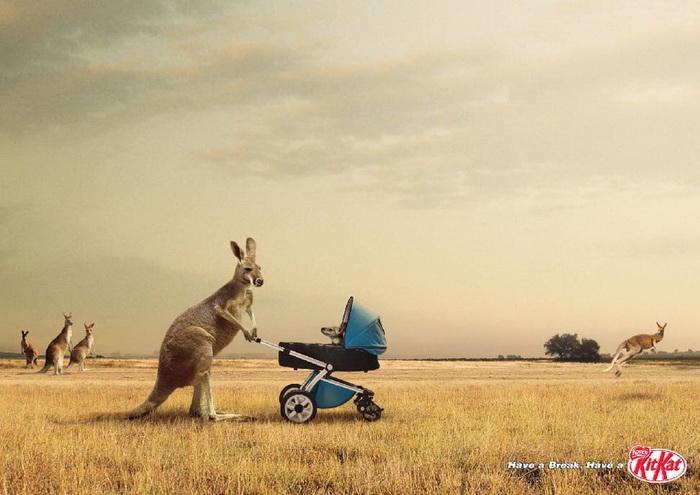 Рекламный постер KitKat: шоколадный батончик покорил даже мамашу—кенгуру