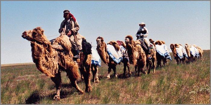 Экспедиция Федора Конюхова верхом на верблюдах