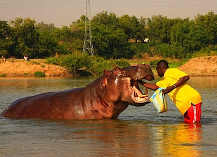 Вся жизнь котоко проходит на воде   Фото: repin.info