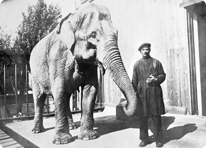 Слониха в блокадном Ленинграде