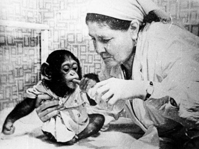 Для того, чтобы выкормить обезьян, один из детских садов выделял донорское молоко