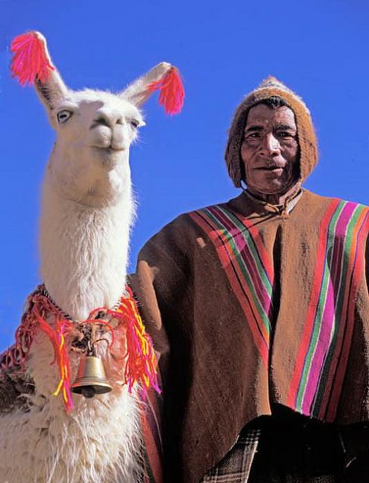 Ламы – культовые животные для жителей Боливии