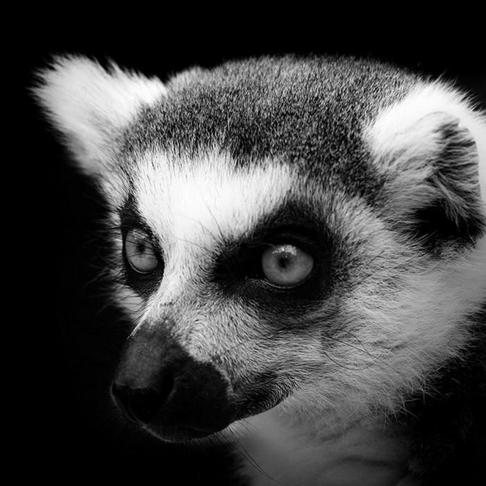 Черно-белые фотографии диких животных от Люкаса Холаса (Lukas Holas)