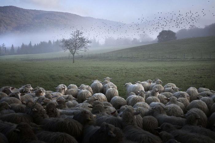 Фотографии из жизни пастуха