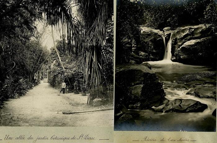Экзотическая природа Мартиники