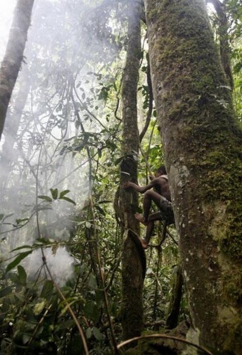 Мбути мастерски лазают по деревья