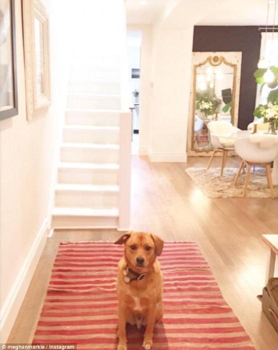 Любимый пес на красной дорожке в коридоре дома Меган Маркл.