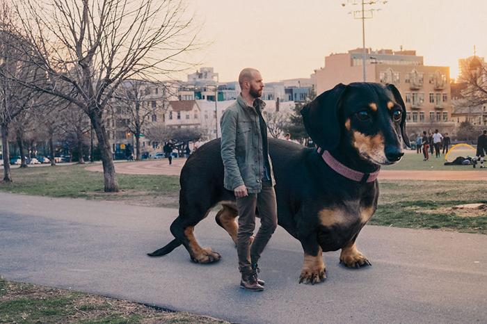 Забавные снимки собаки в Бруклине
