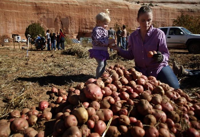В поселении мормоны занимаются сельским хозяйством