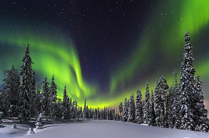 Фотография *Лесные огни* от Nicholas Roemmelt