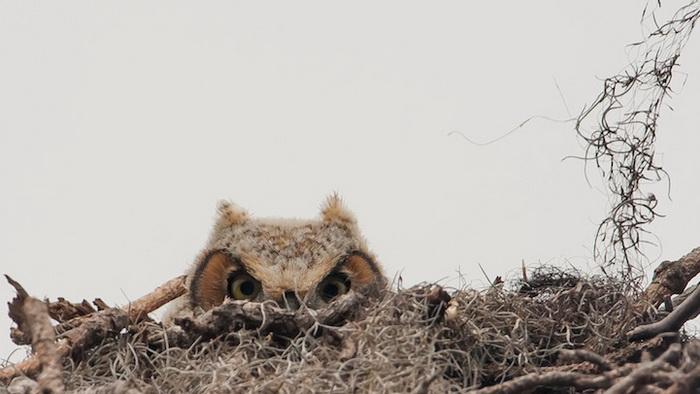 Фотография *Peek a Boo* от Graham McGeorge