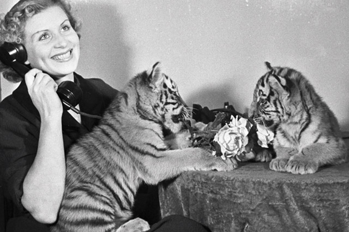 Постановочное фото с тигрятами