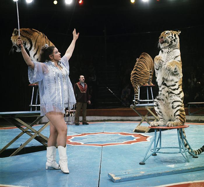 Цирковое выступление Маргариты Назаровой