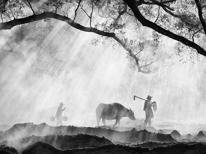 *Древнее фермерство*, Оливер Клинк, 2015 год