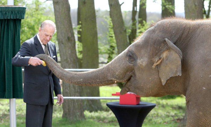 Филипп в зоопарке кормит слона.