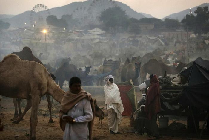 Холодное утро на ярмарке верблюдов в Пушкаре (Индия)