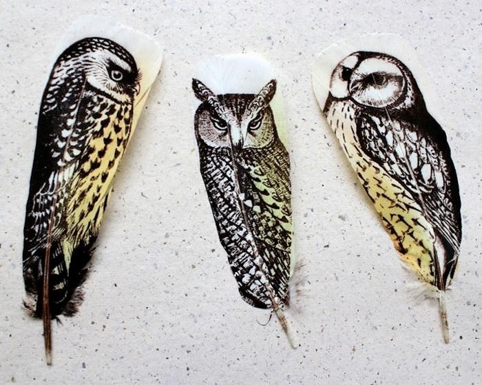 Перья вместо холста: удивительные рисунки птиц от Ребекки Джуэлл (Rebecca Jewell)