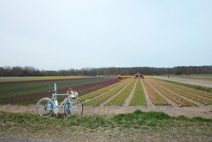 Чудесный фотоцикл о прогулках на велосипеде