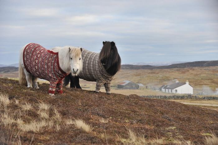 Милые пони в шерстяных свитерах