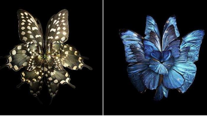 Цветы из крыльев бабочек: фотоманипуляции от Себа Джаниака (Seb Janiak)