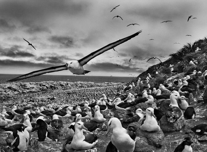 Мир вокруг нас: фотографии Себастьяна Сальдаго