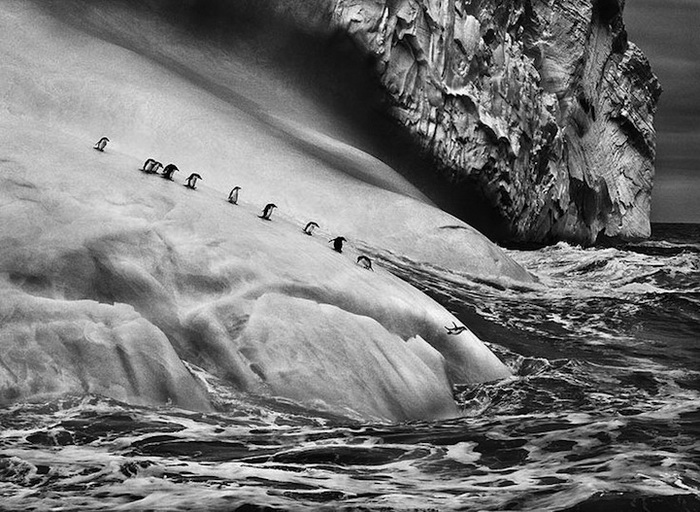 Черно-белые фотографии природы от Себастьяна Сальдаго