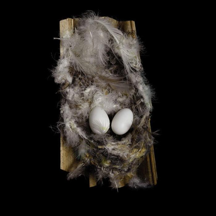Для гнезд птицы используют самые разнообразные материалы