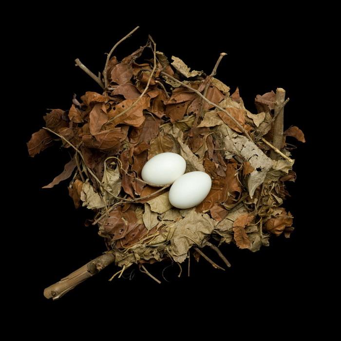 Серия «Bird Nests» от Шарон Билз (Sharon Beals)