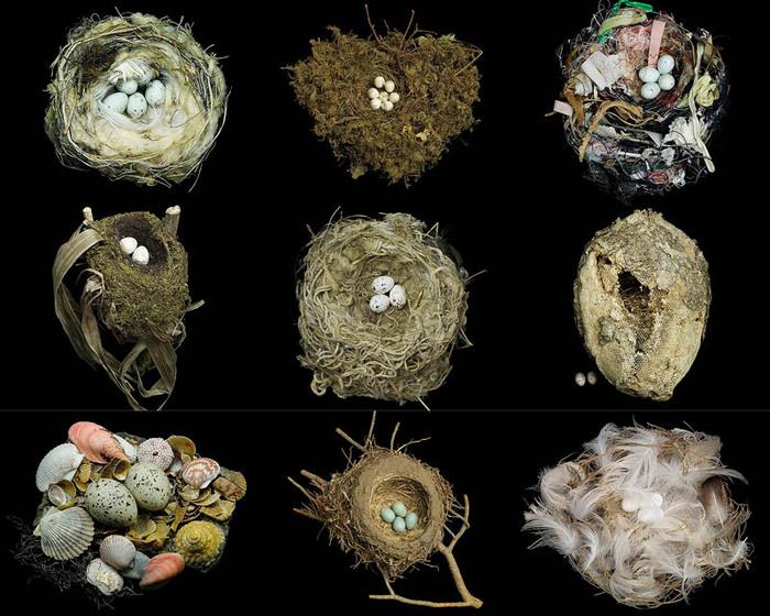 Птичьи гнезда на фотографиях Шарон Билз (Sharon Beals)
