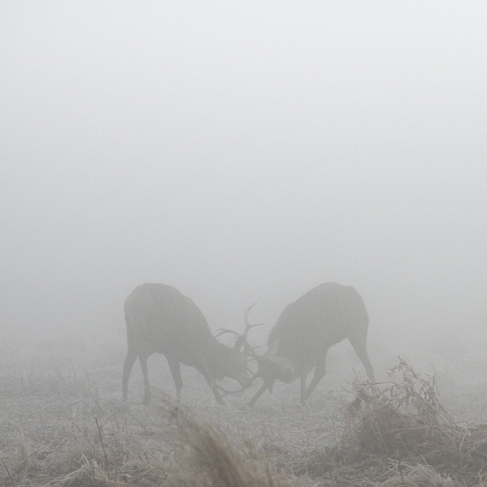 Мистические фотографии оленей в тумане от Sirli Raitma