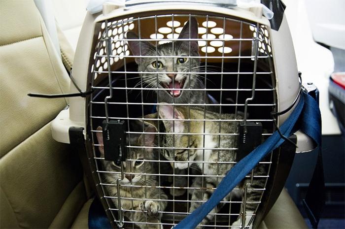 Животные путешествовали в переносных клетках.