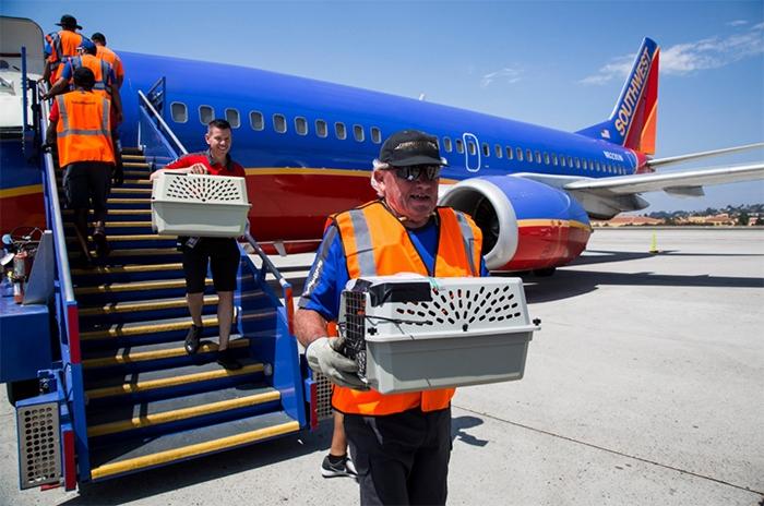 Работники авиакомпании спасли десятки кошек и собак.