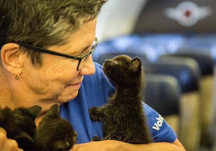 Котятам подарили второй шанс на счастливую жизнь.