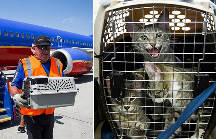 Американская авиакомпания спасла десятки бездомных животных после урагана в Техасе.