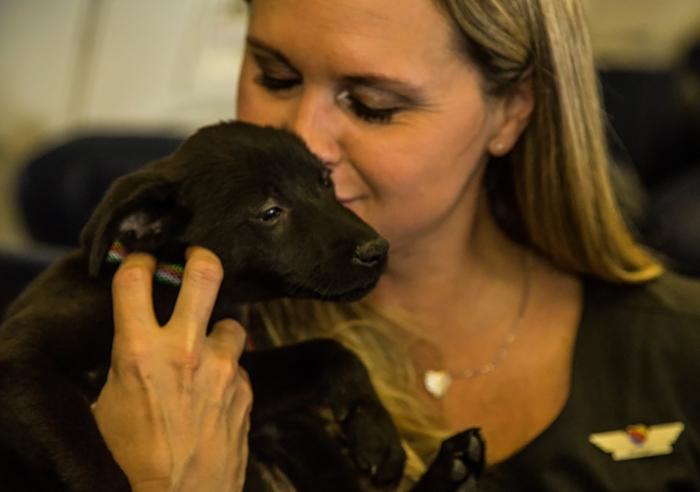 Спасение животных после урагана *Харви* в Техасе.