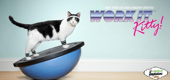 Реклама про корма для котов