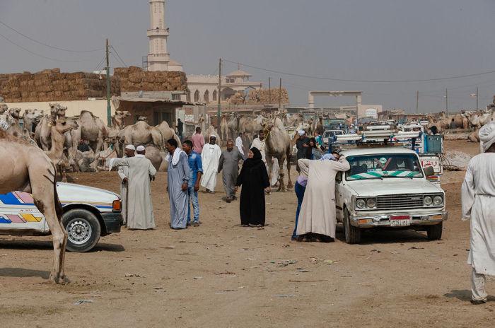 Рынок верблюдов в Биркаше