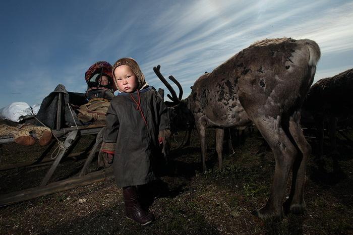 Поселение ненцев в северной Сибири